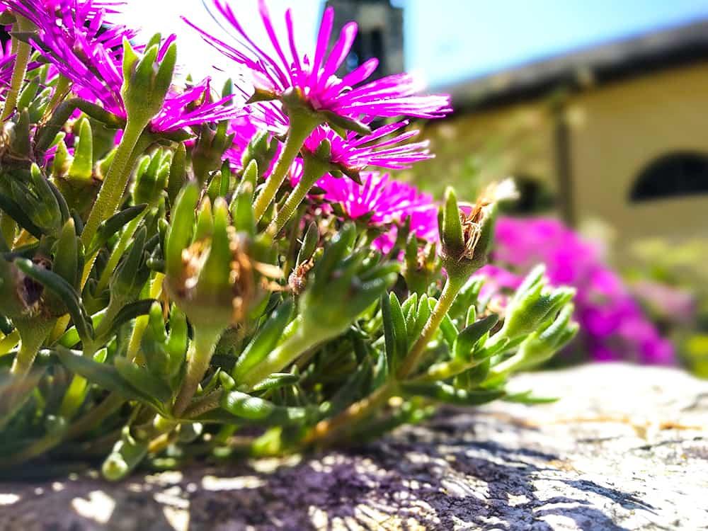 hike-flowers